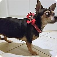 Adopt A Pet :: Tootie - Fairfax, VA