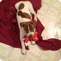 Adopt A Pet :: Kiara $250 - Seneca, SC