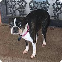 Adopt A Pet :: Bella - Jackson, TN