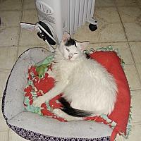 Adopt A Pet :: Sophix - San Dimas, CA