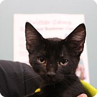 Adopt A Pet :: Beaumont - Sarasota, FL