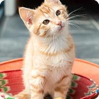 Adopt A Pet :: Mouse - Chicago, IL