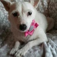 Adopt A Pet :: Bitsy - Chaska, MN
