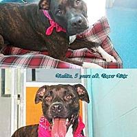 Adopt A Pet :: Nakita - Ponca City, OK