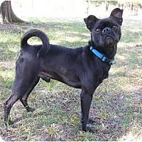 Adopt A Pet :: Pugsley - Mocksville, NC