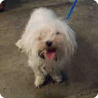 Adopt A Pet :: Princess - Antioch, IL