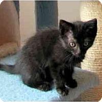 Adopt A Pet :: Missouri & Tennessee - Alexandria, VA