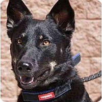 Adopt A Pet :: Jazz - Gilbert, AZ
