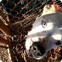 Adopt A Pet :: Charmin - Newtown, CT