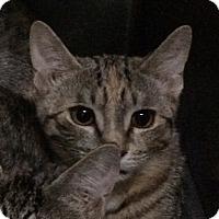 Adopt A Pet :: Sugarplum - New York, NY