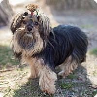 Adopt A Pet :: Molly - Toronto, ON