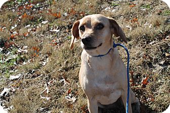 Terrier (Unknown Type, Small) Mix Dog for adoption in Pittsburg, Kansas - Julia