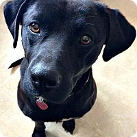 Adopt A Pet :: Lucy - Jefferson, NC