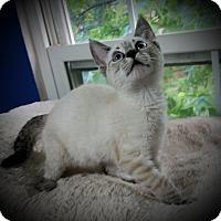 Adopt A Pet :: Linx - Fairborn, OH