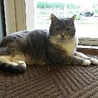 Adopt A Pet :: Lucy - Queenstown, MD