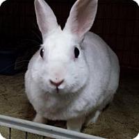 Adopt A Pet :: Ju Ju Bunny - Williston, FL