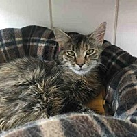 Adopt A Pet :: CUDDLES - Canfield, OH