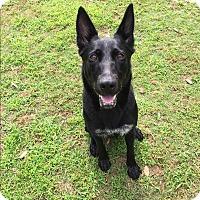 Adopt A Pet :: Evie - Greeneville, TN