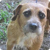 Adopt A Pet :: Diana - Rocky Mount, NC