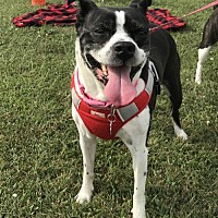 Adopt A Pet :: Molly Jane KY - Various Cities in the entire Southeast, TN