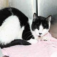 Adopt A Pet :: A456328 - Salt Lake City, UT