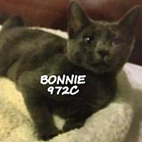 Adopt A Pet :: Bonnie - Spring, TX