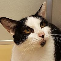 Adopt A Pet :: Orabella - Grayslake, IL