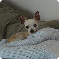 Adopt A Pet :: Max the Magnificient - Poulsob, WA