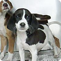 Adopt A Pet :: Mason - Philadelphia, PA