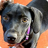 Adopt A Pet :: Jamie - North Hollywood, CA