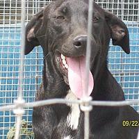 Adopt A Pet :: Moe - Mexia, TX