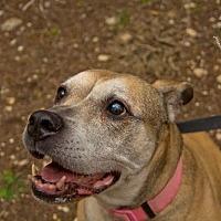 Adopt A Pet :: Kobe - Lago Vista, TX