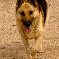 Adopt A Pet :: Lady - Lancaster, CA