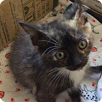 Adopt A Pet :: Houdini - Acme, PA