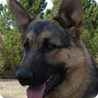 Adopt A Pet :: Della May - Hadley, MI