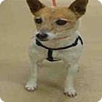 Adopt A Pet :: Daisy - Ogden, UT