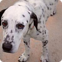 Adopt A Pet :: Jaleith James (J.J.) - Tampa, FL