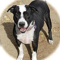 Adopt A Pet :: Romeo - Anaheim, CA