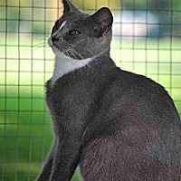 Adopt A Pet :: Arnie FE1-8284 - Thibodaux, LA
