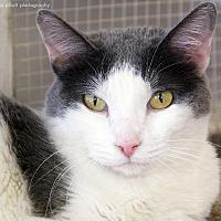 Adopt A Pet :: Brandi - Tucson, AZ