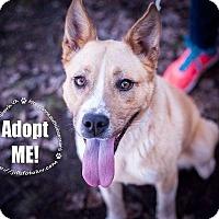 Adopt A Pet :: Margot - Richmond, VA