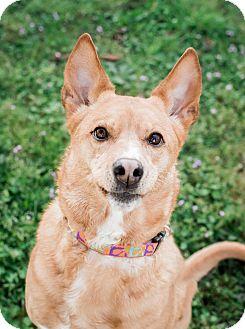 Basenji Mix Dog for adoption in Vancouver, Washington - Luna