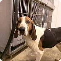 Adopt A Pet :: Joe - Upper Sandusky, OH