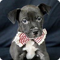Adopt A Pet :: Dylan - Picayune, MS
