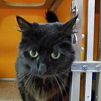 Adopt A Pet :: Bammy - Elyria, OH