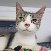 Adopt A Pet :: Delly - Aberdeen, SD