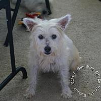 Adopt A Pet :: Tootsie - Ponte Vedra Beach, FL