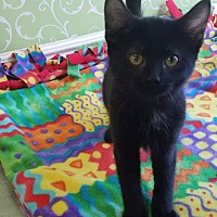 Adopt A Pet :: Chai - Red Wing, MN