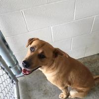 Adopt A Pet :: Jackjack - Kirby, TX