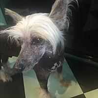 Adopt A Pet :: Devon - Santa Ana, CA